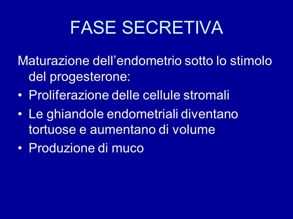 FASE SECRETIVA Maturazione dell'endometrio sotto lo stimolo del progesterone: Proliferazione delle cellule stromali.