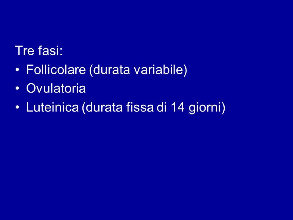 Tre fasi: Follicolare (durata variabile) Ovulatoria Luteinica (durata fissa di 14 giorni)
