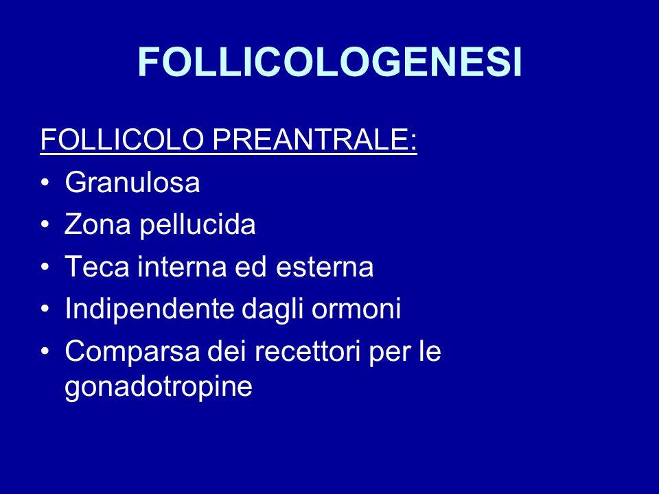 FOLLICOLOGENESI FOLLICOLO PREANTRALE: Granulosa Zona pellucida