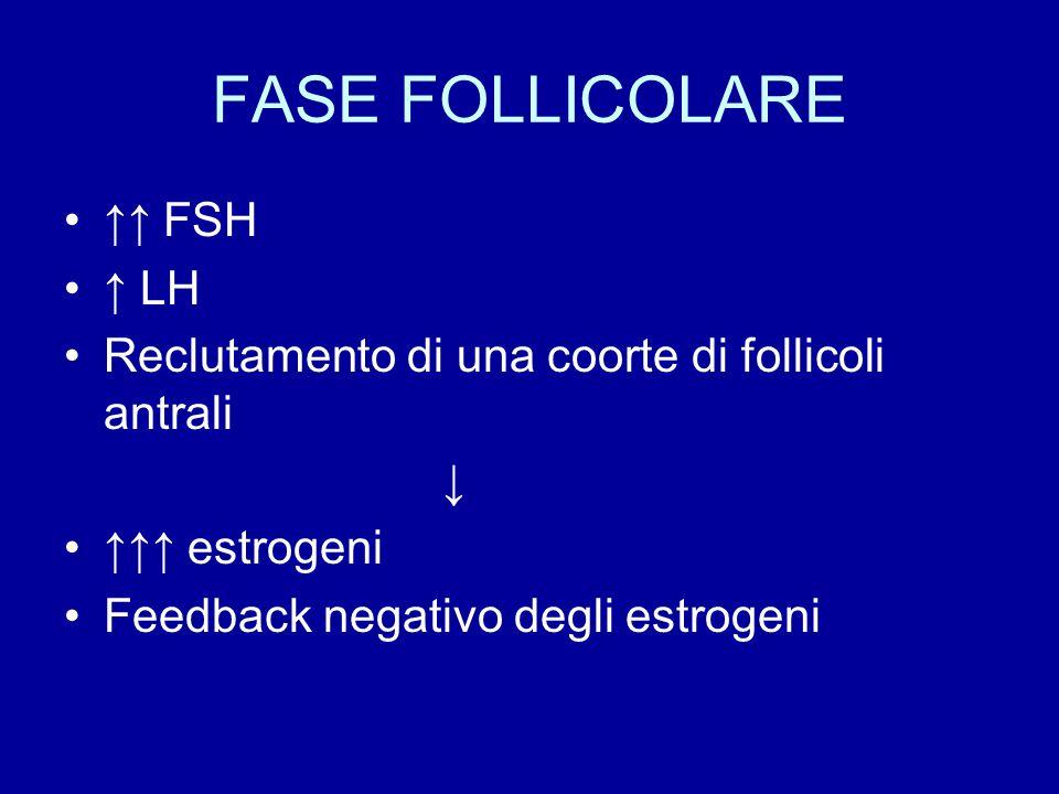 FASE FOLLICOLARE ↑↑ FSH ↑ LH