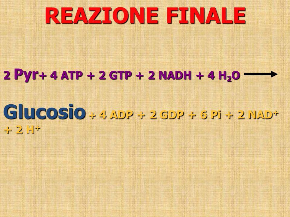 REAZIONE FINALE Glucosio + 4 ADP + 2 GDP + 6 Pi + 2 NAD+ + 2 H+