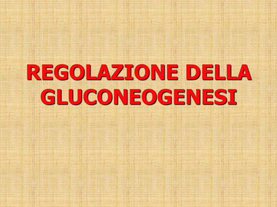 REGOLAZIONE DELLA GLUCONEOGENESI