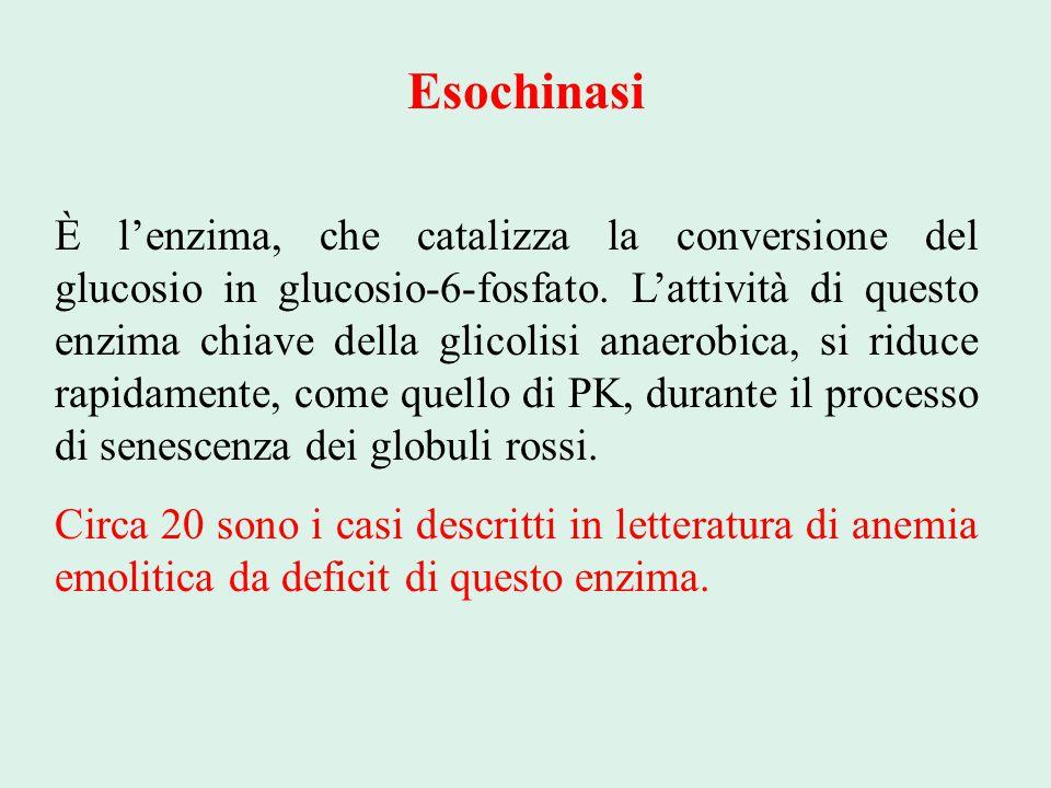 Esochinasi