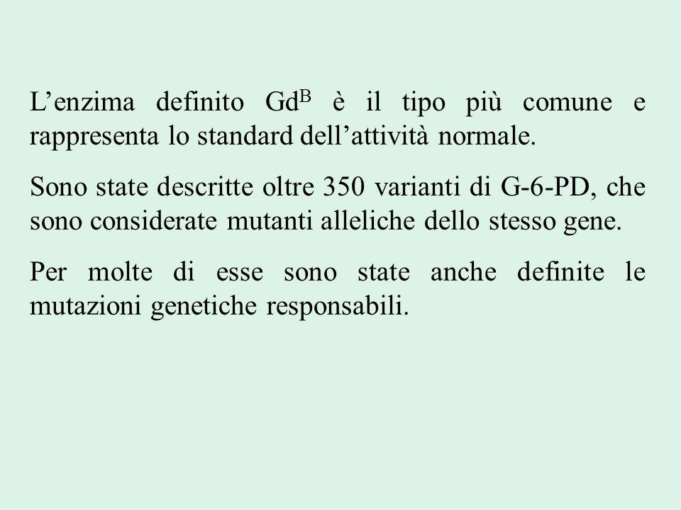 L'enzima definito GdB è il tipo più comune e rappresenta lo standard dell'attività normale.