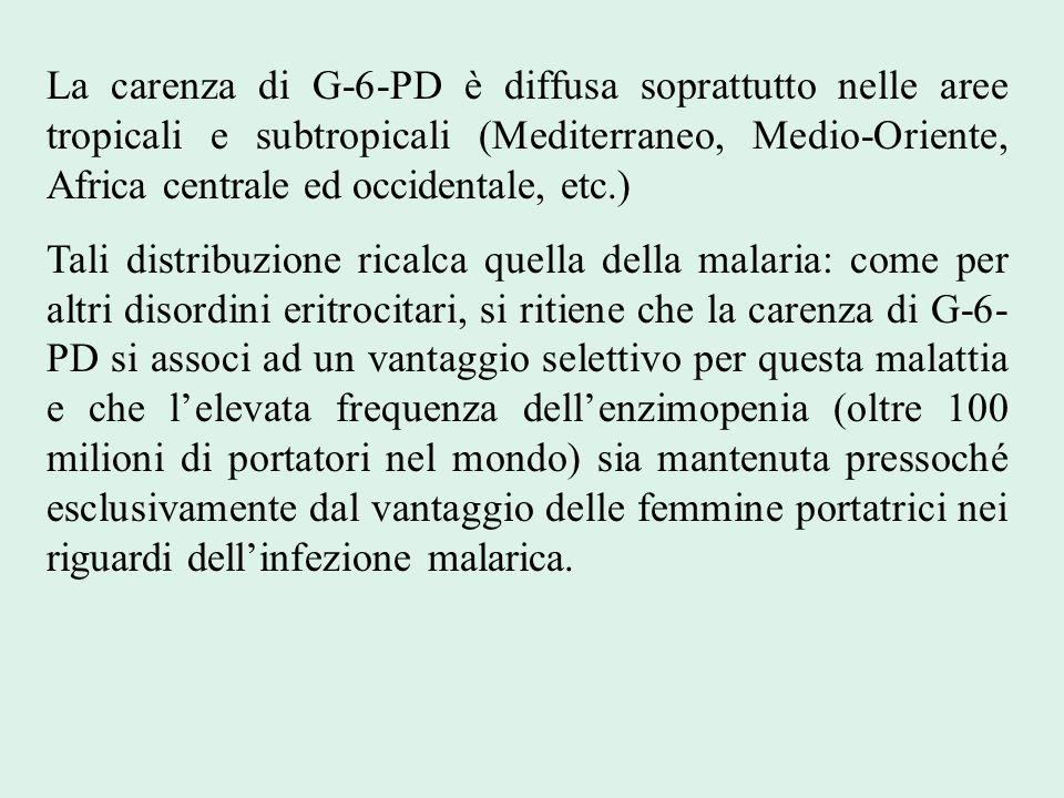 La carenza di G-6-PD è diffusa soprattutto nelle aree tropicali e subtropicali (Mediterraneo, Medio-Oriente, Africa centrale ed occidentale, etc.)