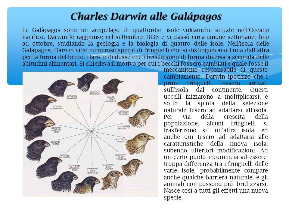 Le Galápagos sono un arcipelago di quattordici isole vulcaniche situate nell Oceano Pacifico. Darwin le raggiunse nel settembre 1835 e vi passò circa cinque settimane, fino ad ottobre, studiando la geologia e la biologia di quattro delle isole. Nell'isola delle Galapagos, Darwin vide numerose specie di fringuelli che si distinguevano l'una dall'altra per la forma del becco. Darwin dedusse che i becchi sono di forma diversa a seconda delle abitudini alimentari. Si chiedeva il motivo per cui i becchi fossero cambiati e quale fosse il