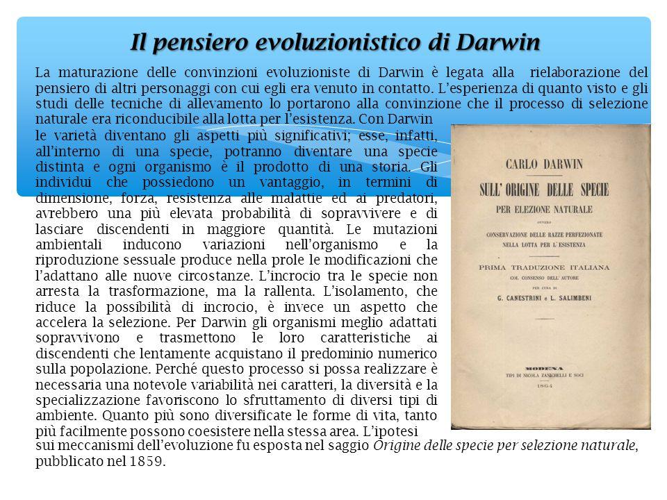 La maturazione delle convinzioni evoluzioniste di Darwin è legata alla rielaborazione del pensiero di altri personaggi con cui egli era venuto in contatto. L'esperienza di quanto visto e gli studi delle tecniche di allevamento lo portarono alla convinzione che il processo di selezione naturale era riconducibile alla lotta per l'esistenza. Con Darwin