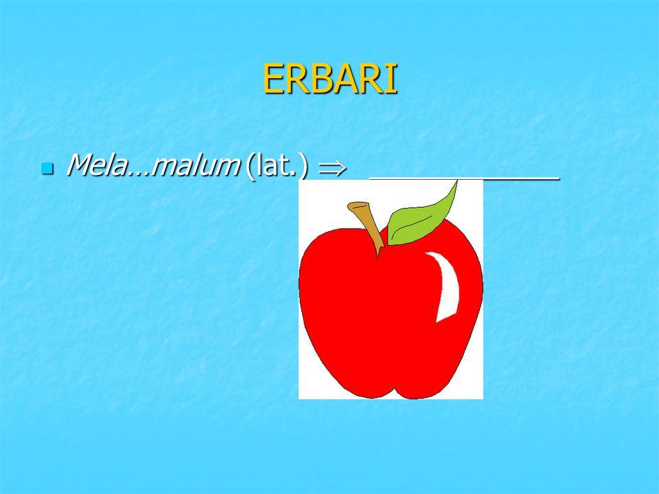 ERBARI Mela…malum (lat.)  ____________