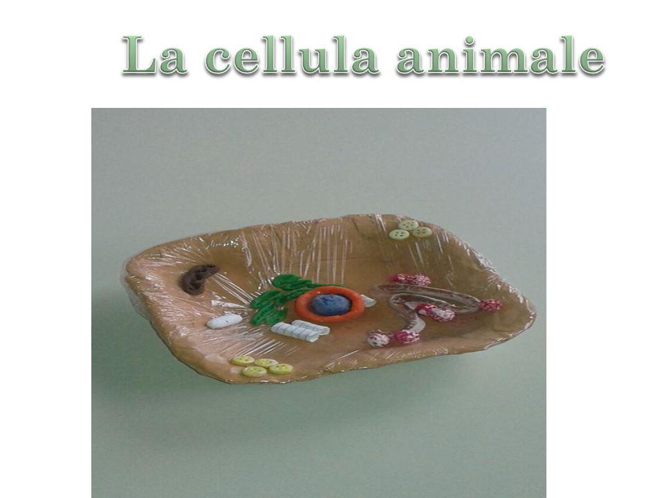 La cellula animale