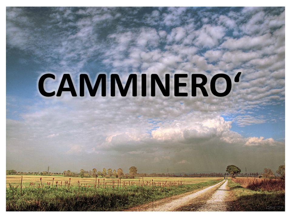 CAMMINERO'