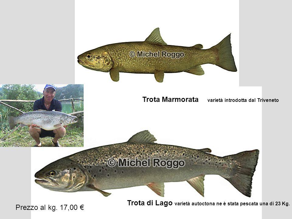 Trota Marmorata varietà introdotta dal Triveneto