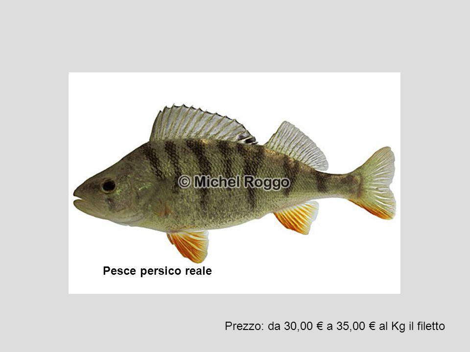 Pesce persico reale Prezzo: da 30,00 € a 35,00 € al Kg il filetto