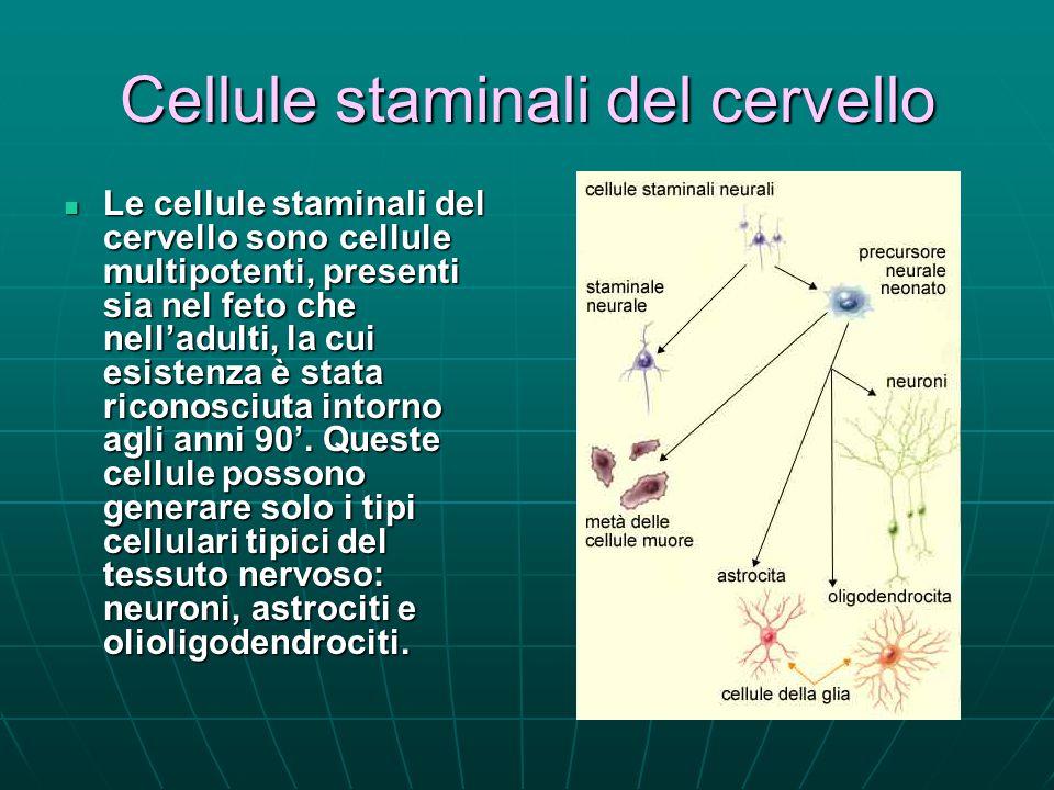 Cellule staminali del cervello