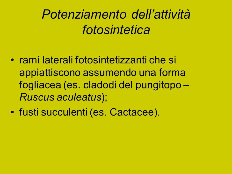 Potenziamento dell'attività fotosintetica