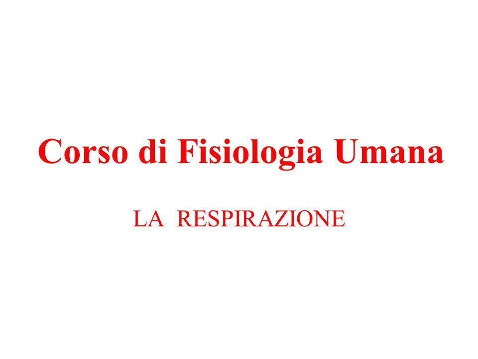 Corso di Fisiologia Umana
