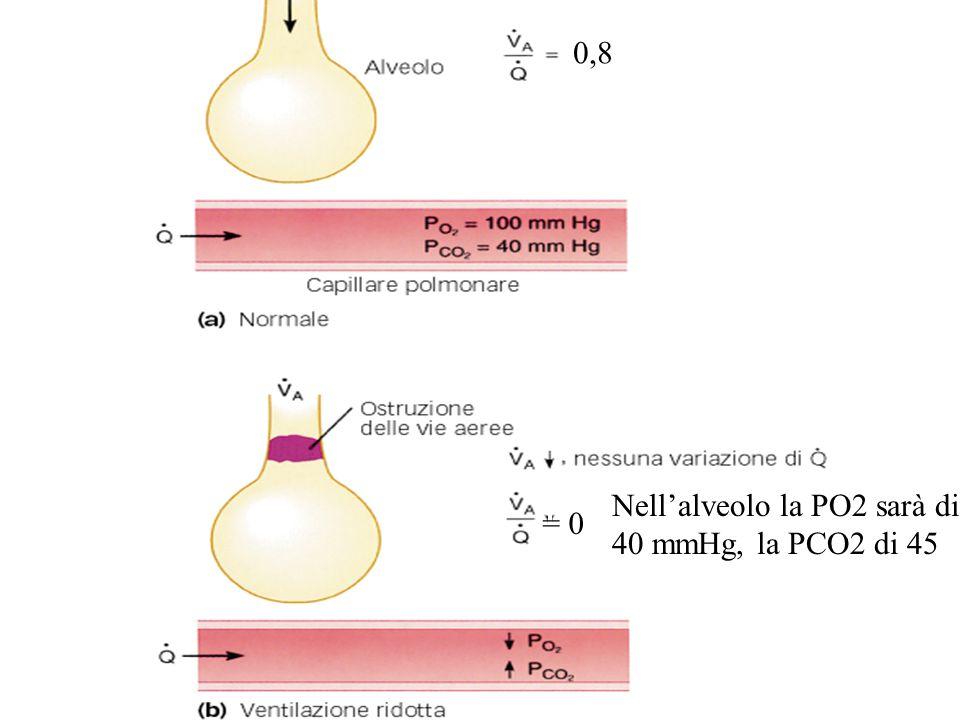 0,8 Nell'alveolo la PO2 sarà di 40 mmHg, la PCO2 di 45 = 0