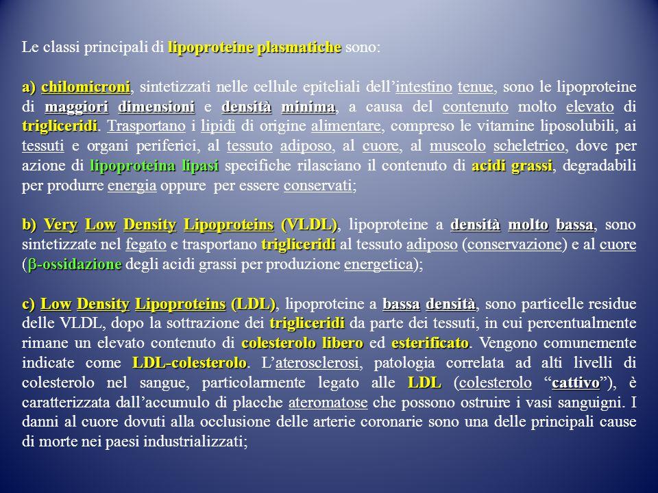 Le classi principali di lipoproteine plasmatiche sono: