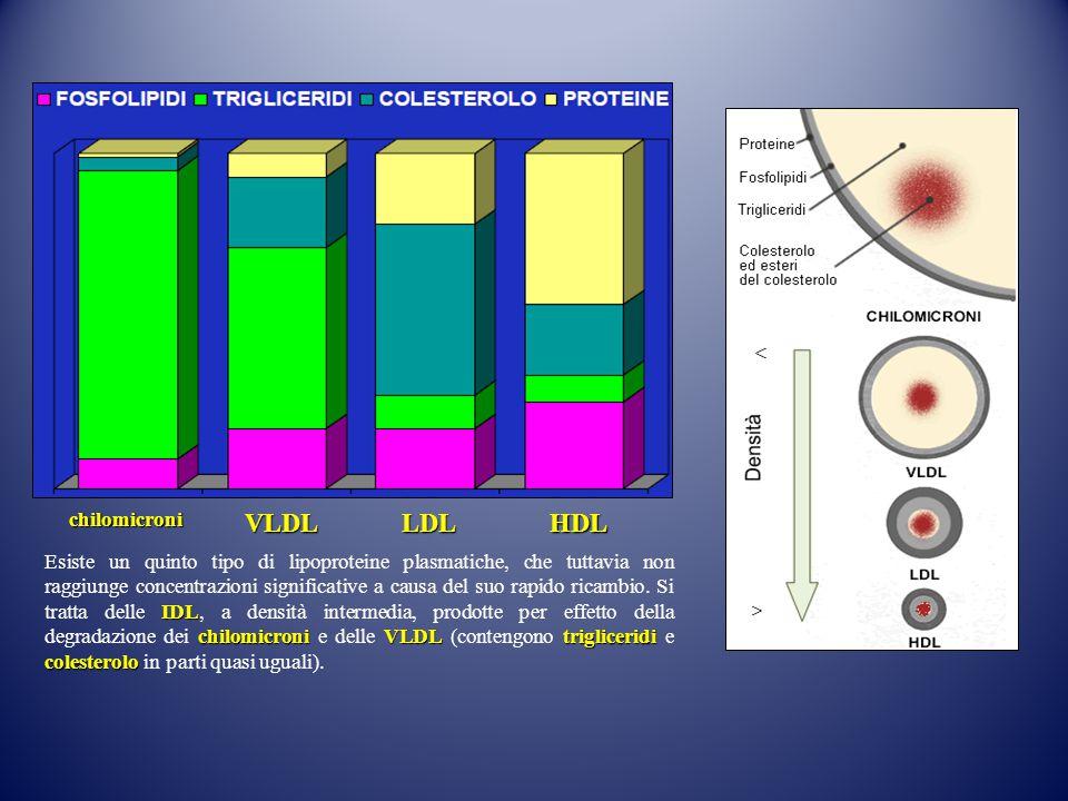 VLDL LDL HDL chilomicroni