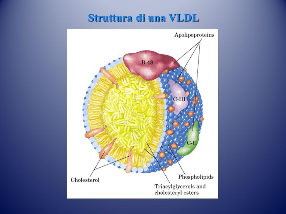 Struttura di una VLDL