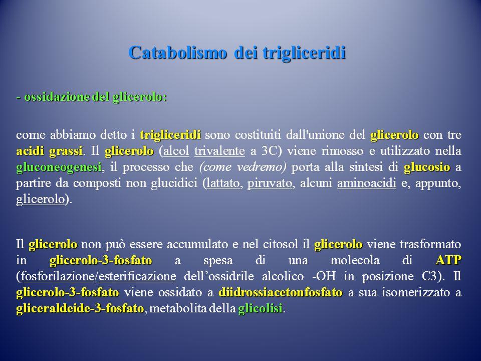 Catabolismo dei trigliceridi