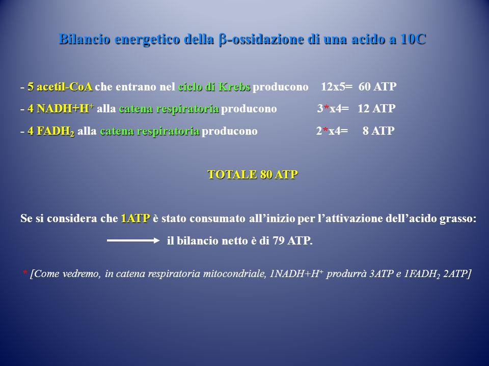 Bilancio energetico della b-ossidazione di una acido a 10C