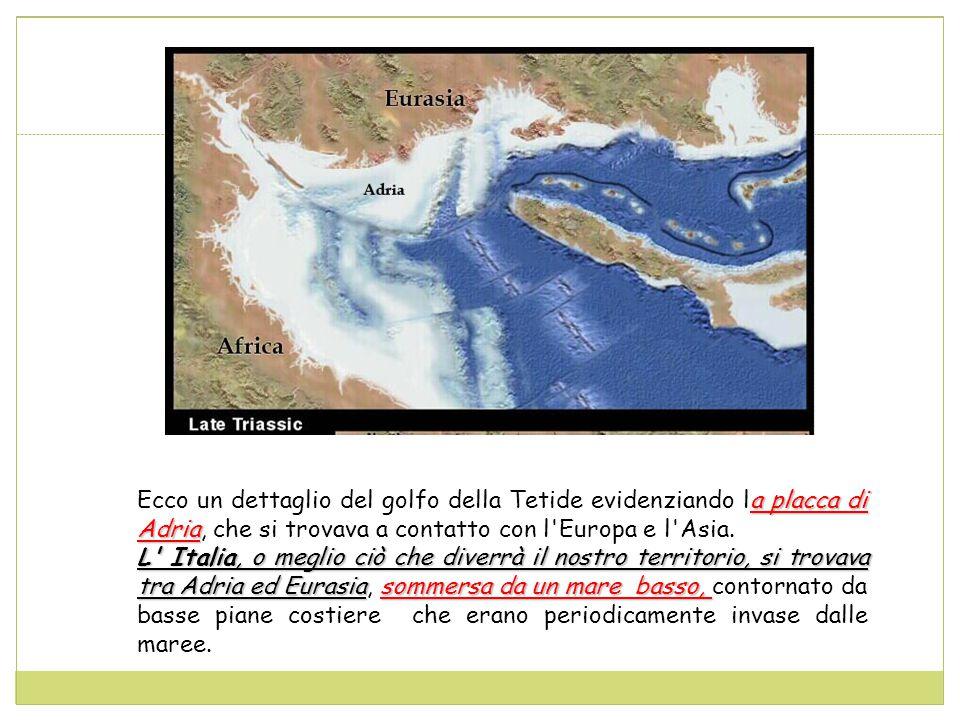 Ecco un dettaglio del golfo della Tetide evidenziando la placca di Adria, che si trovava a contatto con l Europa e l Asia.
