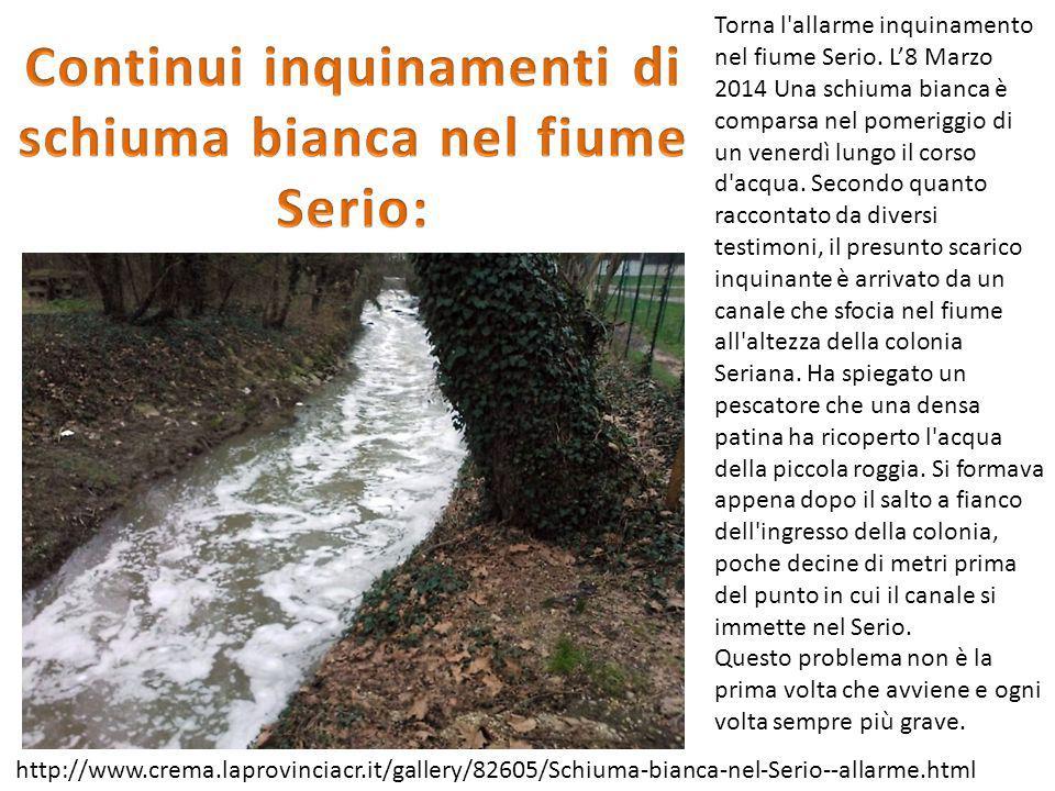 Continui inquinamenti di schiuma bianca nel fiume Serio: