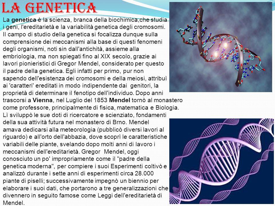 La genetica La genetica è la scienza, branca della biochimica,che studia. i geni, l ereditarietà e la variabilità genetica degli cromosomi.