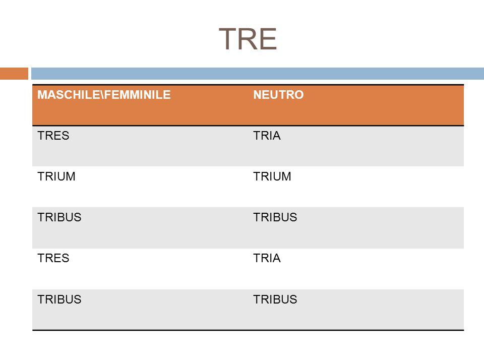 TRE MASCHILE\FEMMINILE NEUTRO TRES TRIA TRIUM TRIBUS