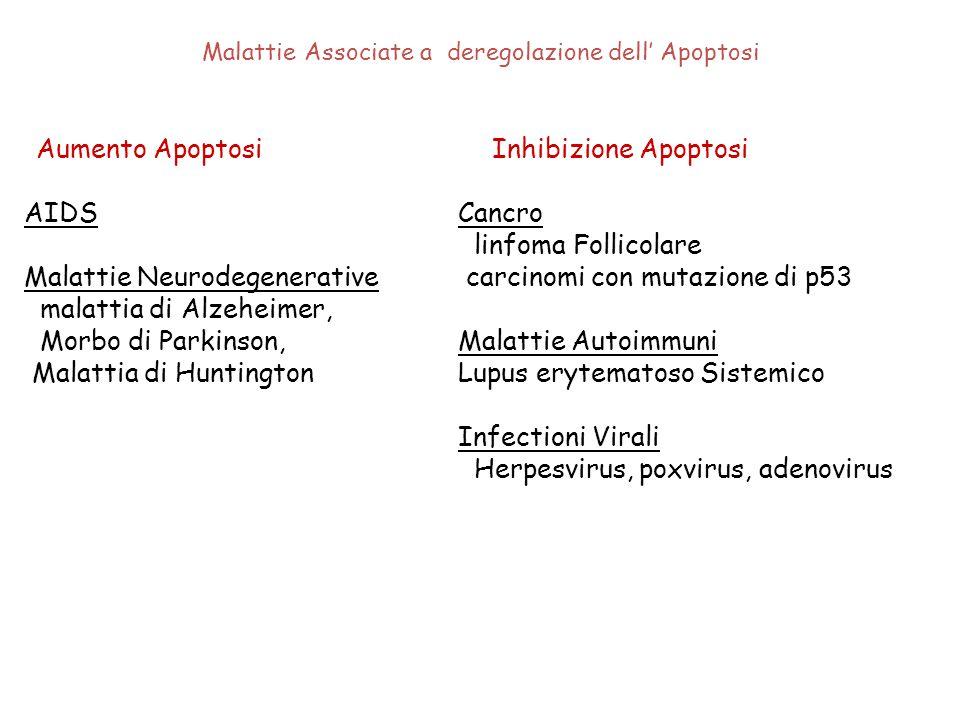 Malattie Associate a deregolazione dell' Apoptosi