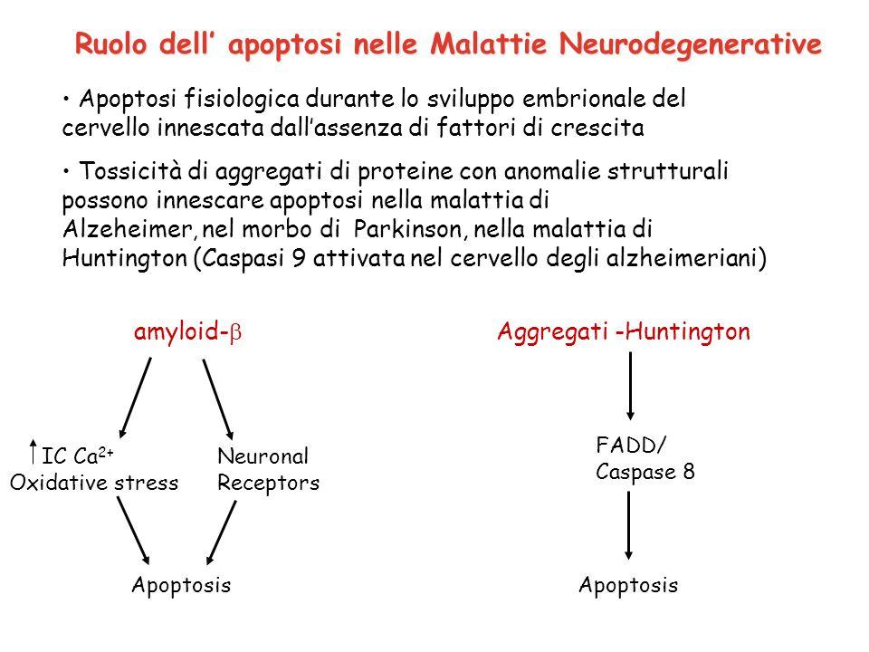 Ruolo dell' apoptosi nelle Malattie Neurodegenerative