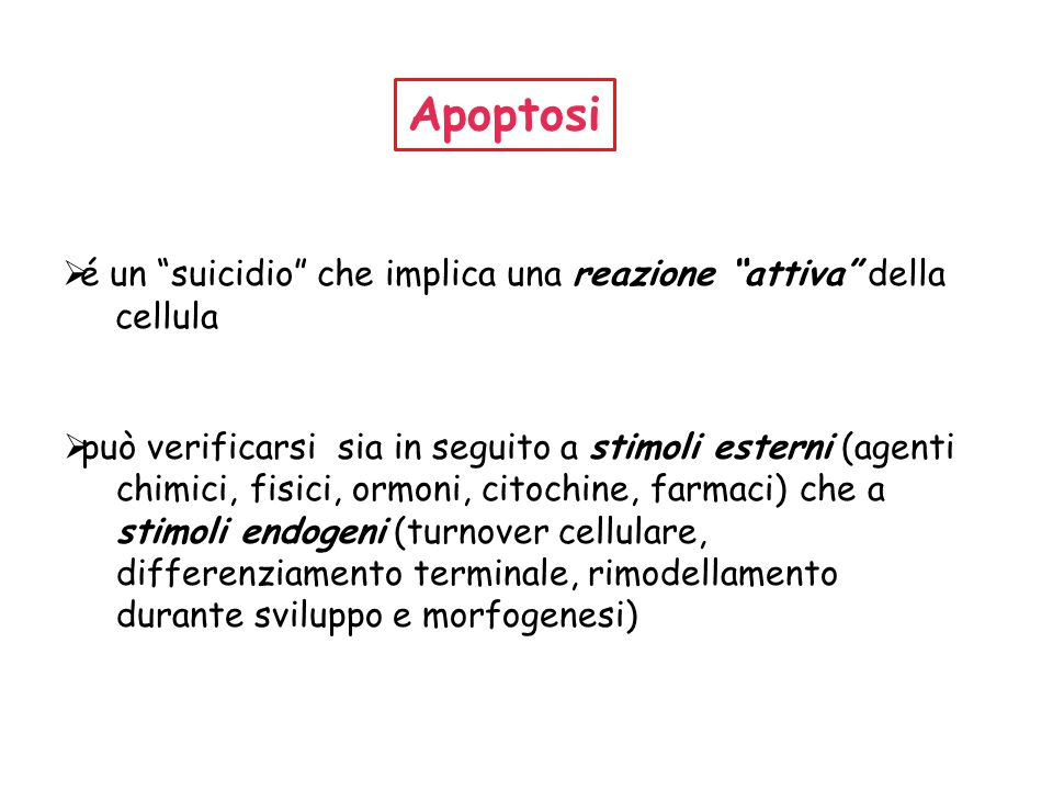 Apoptosi é un suicidio che implica una reazione attiva della cellula. può verificarsi sia in seguito a stimoli esterni (agenti.