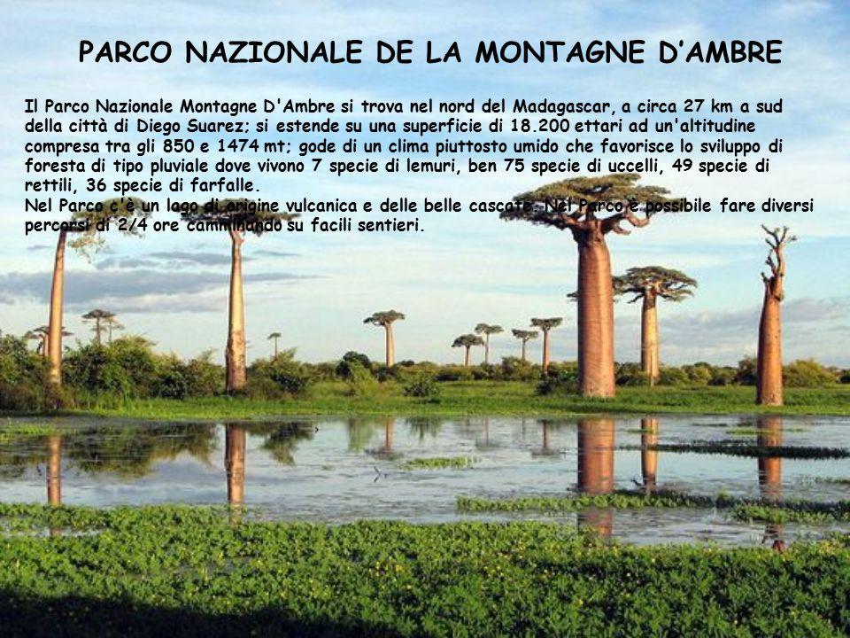 PARCO NAZIONALE DE LA MONTAGNE D'AMBRE