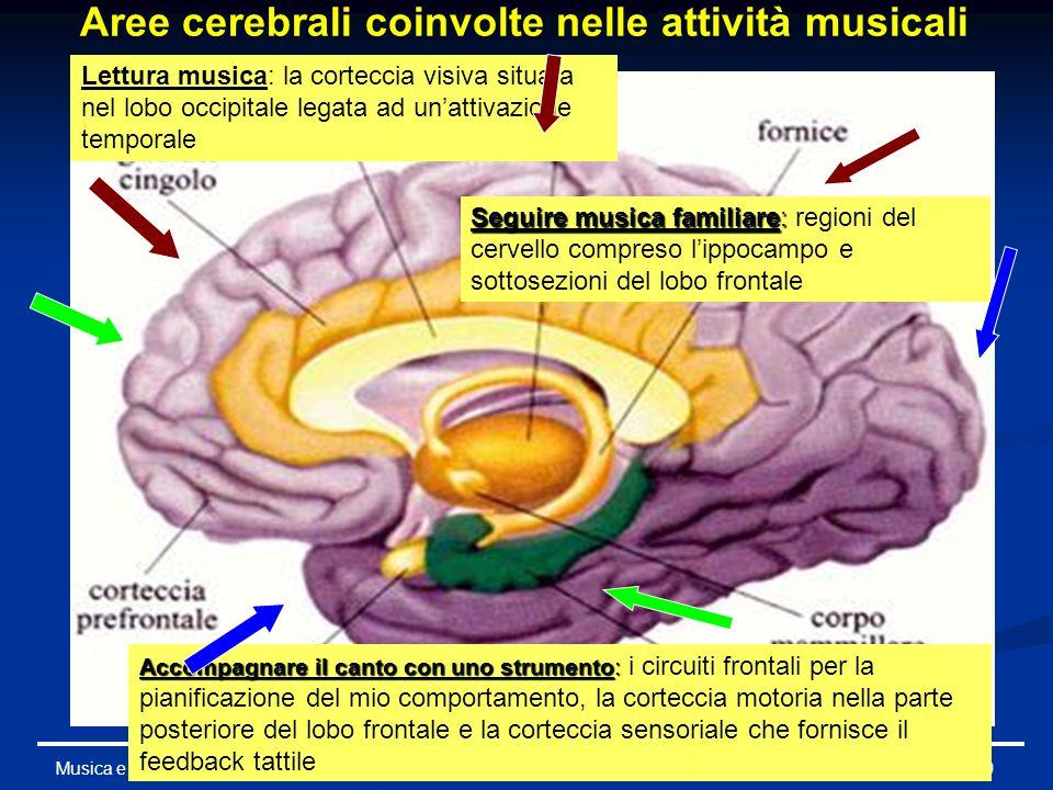Aree cerebrali coinvolte nelle attività musicali