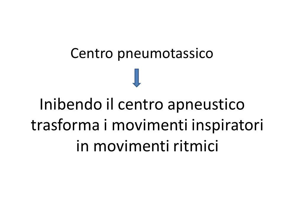 Centro pneumotassico Inibendo il centro apneustico trasforma i movimenti inspiratori in movimenti ritmici.