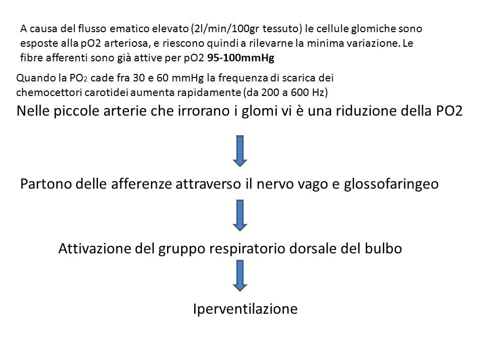 Partono delle afferenze attraverso il nervo vago e glossofaringeo