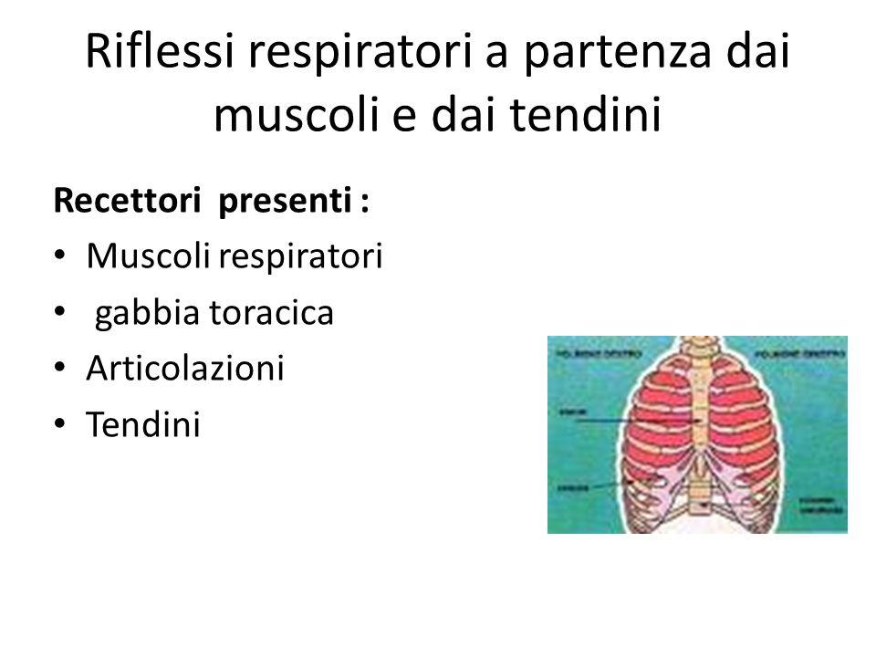 Riflessi respiratori a partenza dai muscoli e dai tendini