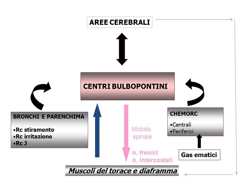 Muscoli del torace e diaframma