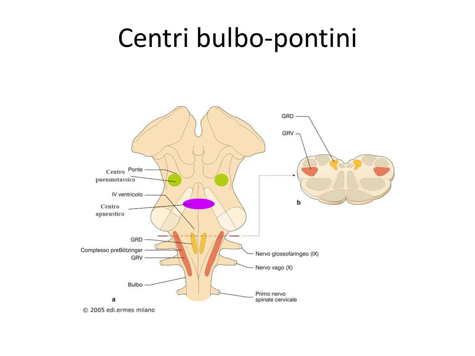Centri bulbo-pontini