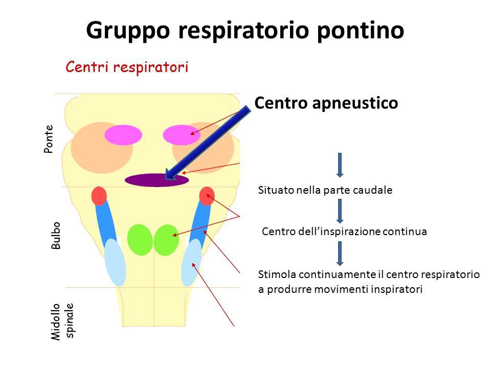 Gruppo respiratorio pontino