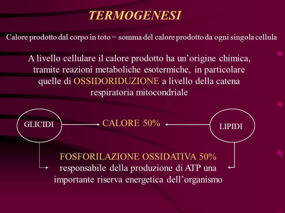 TERMOGENESI Calore prodotto dal corpo in toto = somma del calore prodotto da ogni singola cellula.