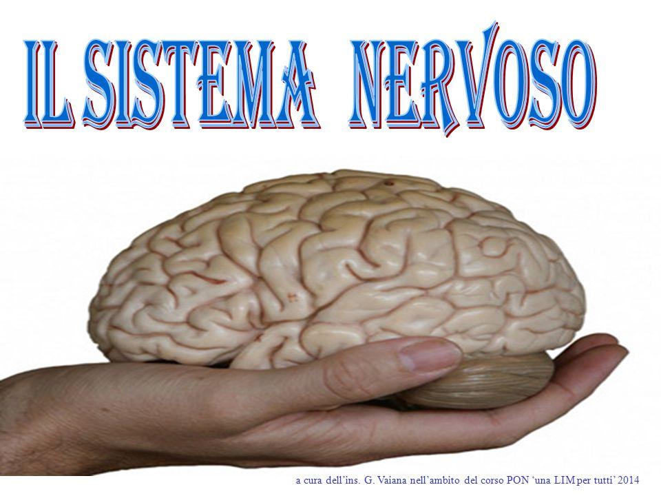 Il sistema nervoso a cura dell'ins. G. Vaiana nell'ambito del corso PON 'una LIM per tutti' 2014