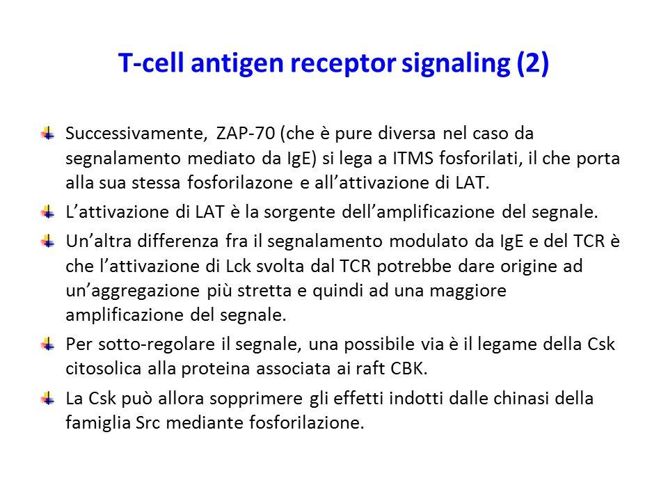 T-cell antigen receptor signaling (2)