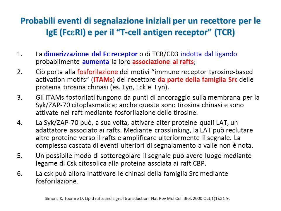 Probabili eventi di segnalazione iniziali per un recettore per le IgE (FcRI) e per il T-cell antigen receptor (TCR)