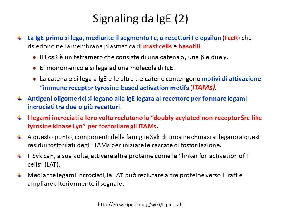 Signaling da IgE (2)