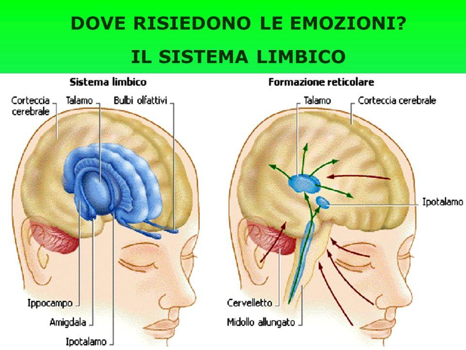 DOVE RISIEDONO LE EMOZIONI