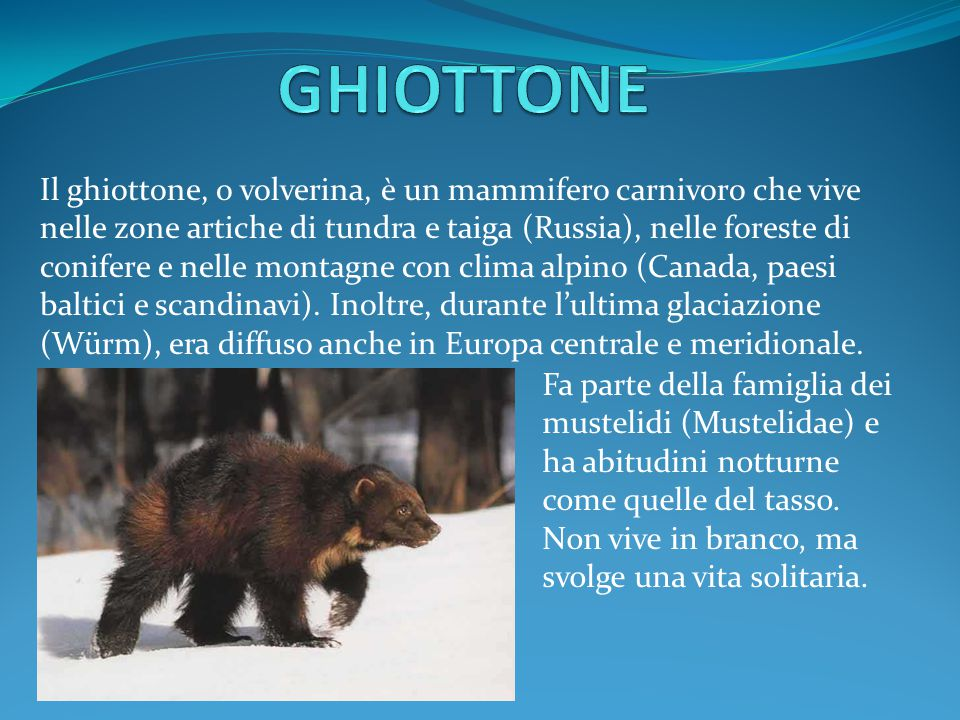 GHIOTTONE