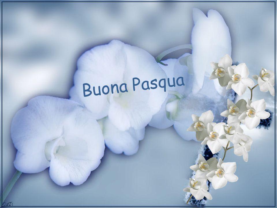 Buona Pasqua Ci sono amicizie che nascono nel web