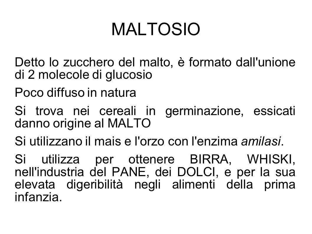 MALTOSIO Detto lo zucchero del malto, è formato dall unione di 2 molecole di glucosio. Poco diffuso in natura.