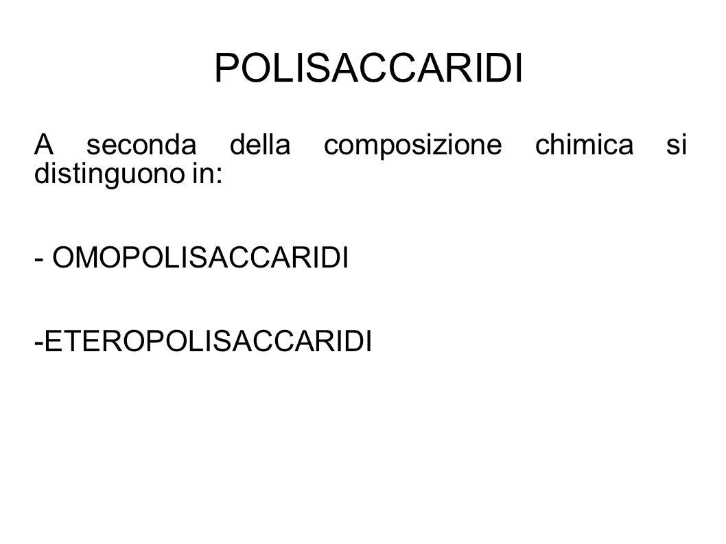 POLISACCARIDI A seconda della composizione chimica si distinguono in: